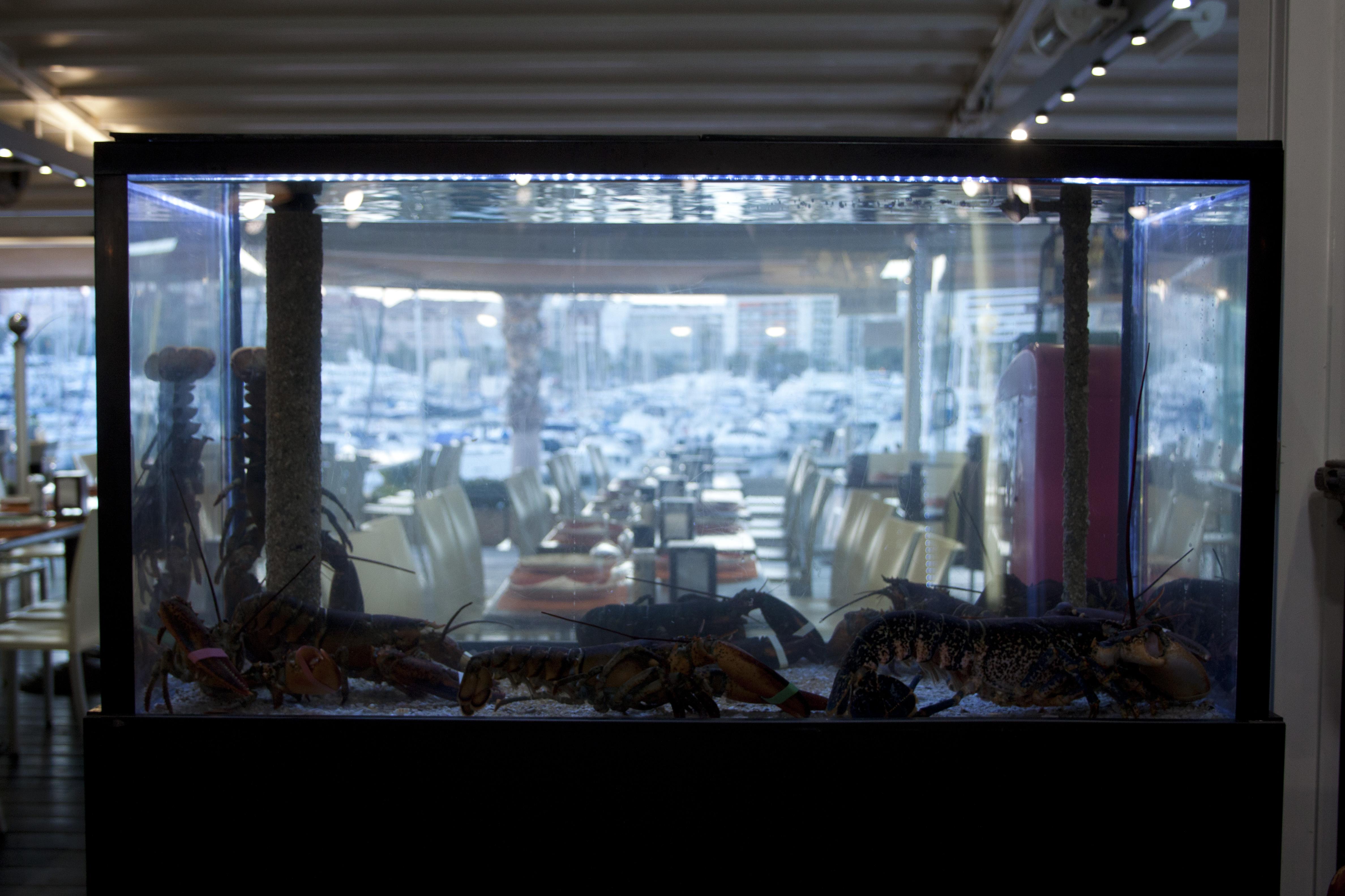 Vivero Para Marisco En El Restaurante El Chipirón - Acuarios Alicante